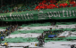 51 Sporting Lisbon Fans Jailed for Five Years